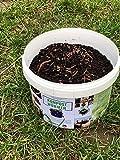 Kompostwürmer 250 Stück in Spezialeimer Garten Kompostbeschleuniger Wurmkomposter Wurmkiste Angelköder Regenwürmer