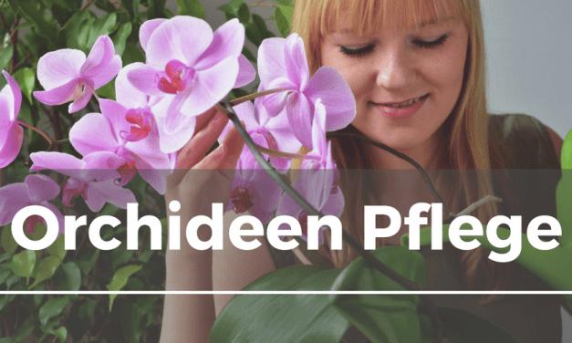 Orchideen Pflege
