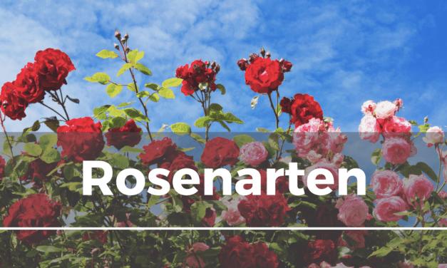 Rosenarten