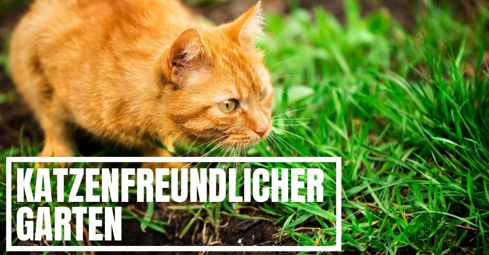 Katzenfreundlicher Garten